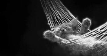 Relax-Katze; Rechte: WDR/Horn
