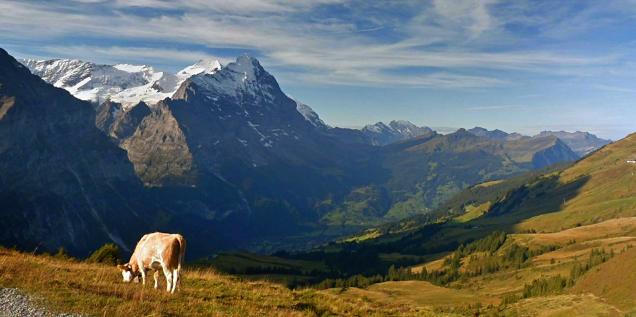 Panoramafoto der Alpen . generiert durch AI-Software; Rechte: Google