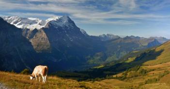 Landschaftsaufnahne - erstellt durch KI-System; Rechte: Google