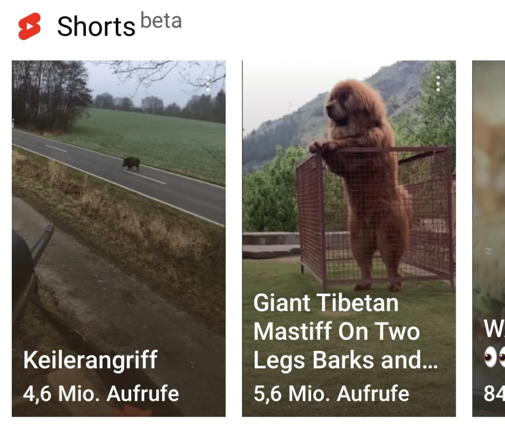 Youtube Shorts erscheint als Feed in der Youtube-App; Rechte: WDR/Schieb