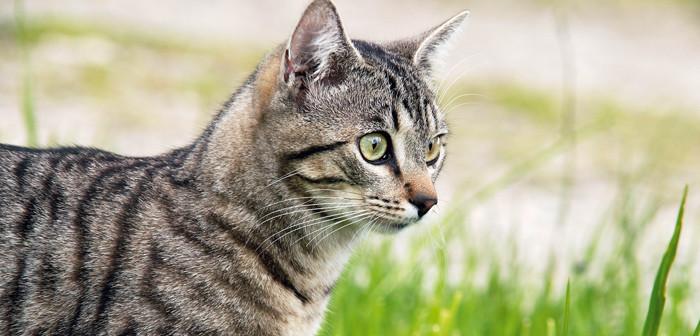 Junge Katze auf Feld